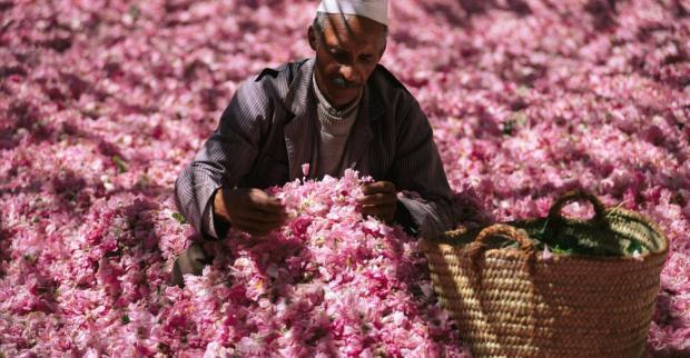 marocco-rose-festival-valle-delle-rose-01